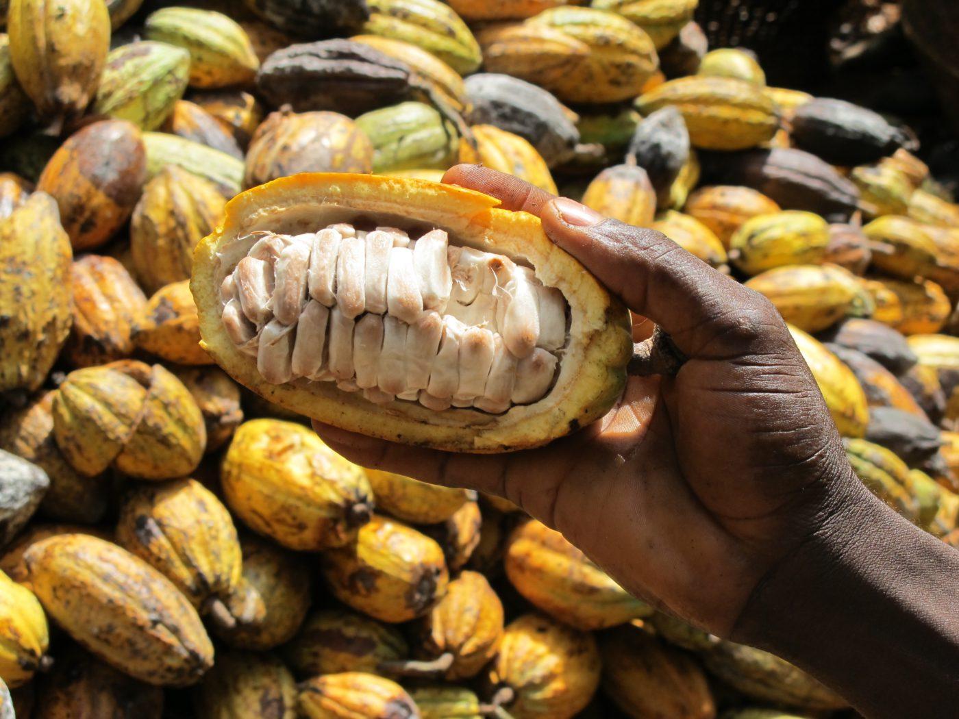 waar is cacao goed voor
